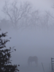 Fog sets in...