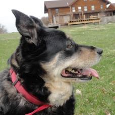 Molly on a stroll